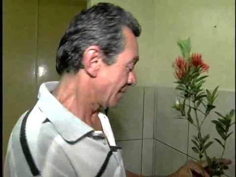 HOMEM FURTA PLANTA DA AV BRASIL E VAI PRESO