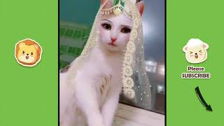 😍 Cutest Funny Little Animals! - June 2019