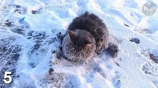 Top 10 Animals Found Frozen In Ice