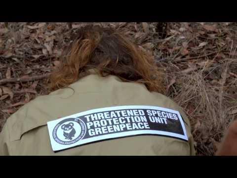 Greenpeace Threatened Species Unit in the Leard State Forest