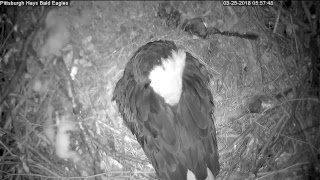 Hays Bald Eagles Live Stream