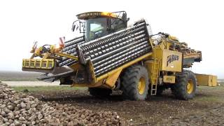 Ropa euro-Maus 3 - sugar beets loader [www.plakys.lt]