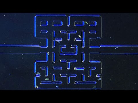 Techamok independent technology news researchers have built a super tiny version of the pac man maze only one millimeter in diameter so they could turn microorganisms loose on each other in a fandeluxe Gallery