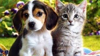 Dog & Cats Cuteness Overload: Funny Compilation