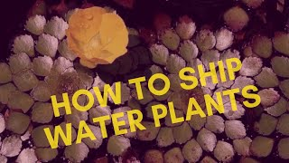Shipping water plants || how to ship water plants Malayalam (മലയാളം )