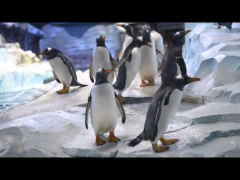 See inside the largest peguin facility in the world, the Detroit Zoo's Polk Penguin Conservation Cen