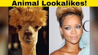 Hilarious Examples Of Animals That Look Like Celebs!
