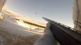 chasse à la corneille 2017