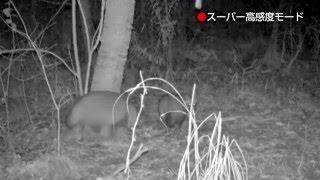 タヌキ 伊達野生の王国調査隊 deep DATE