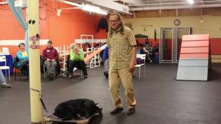 Dog Training Seminar Clip | How about Sandbags | Solid K9 Training Dog Training