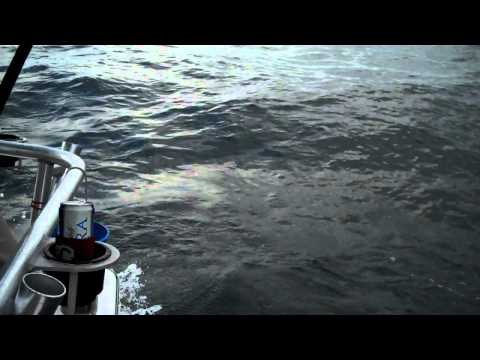 Gulf Shores Alabama Shark Fishing Nov 2010.MP4