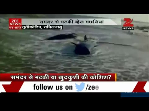 Several whales washed ashore in Tamil Nadu's Tuticorin