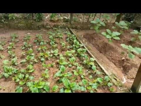 Farm Malaysia Farm in The City Malaysia 城の