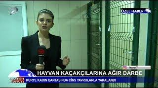 Hayvan kaçakçılarına ağır darbe! Kurye kadın çantasında cins yavrularla yakalandı