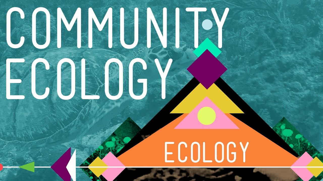 ecology coursework Ecology emphasizes the study of the interactions among and between organisms   of biology, botany, ecology, and zoology, we offer coursework and research.