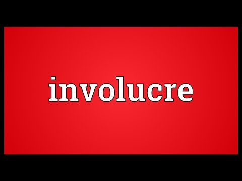 Header of involucre