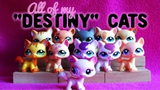"All of My LPS ""Destiny"" Cats!"