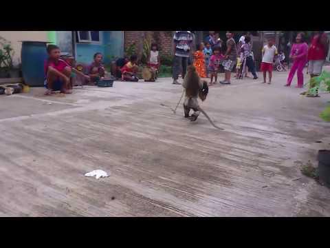 Topeng Monyet, monkey play