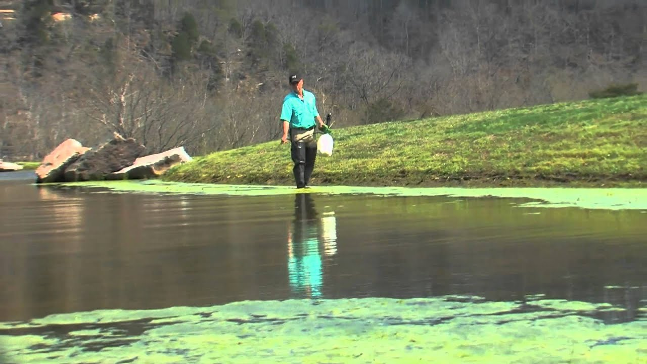 Spook Spann Lake Management Algae Removal And Fish Stocking By Smart Fish Farm Youtube
