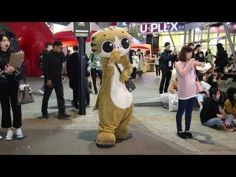 JHKTV] 신촌명물고양이댄스shinchon special cat dance