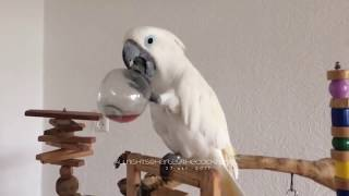 Приколы с животными #1 | funny animals | animals coub
