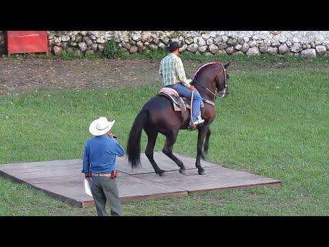 caballos bailadores chiapa colima.mov
