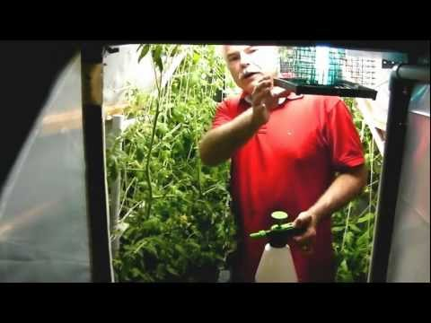 Plain 2 Grow System Plain2Grow Hydroponic Passive Wick Hybrid Tomatoes and Foliar Feeding