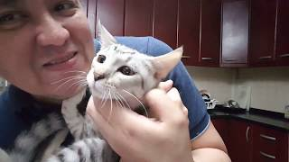 Samsun and I: Characteristic of an Egyptian Mau cat