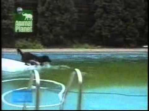 Funny Dog in Pool vidsbook com