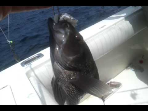 video-2012-05-05-11-48-58.mp4 savannah cobia fishing 4 by AIFC