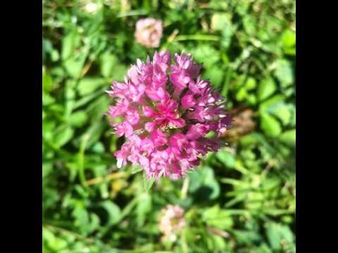 #flowers #garden #red #beautiful #nature #nice