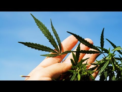 Can Marijuana Help Multiple Sclerosis? | Marijuana