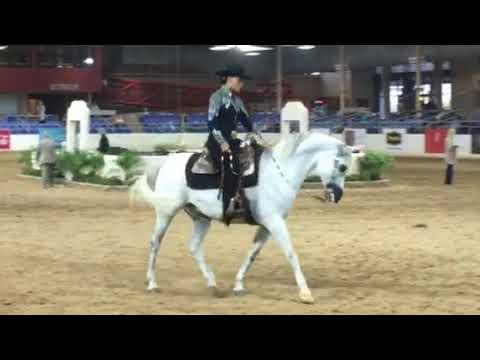 2018 63rd Annual Scottsdale Arabian Horse Show