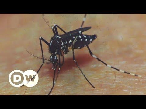 Wie kann man die Dengue-Plage verhindern? | DW Deutsch