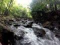 Pennsylvania Native Brookies