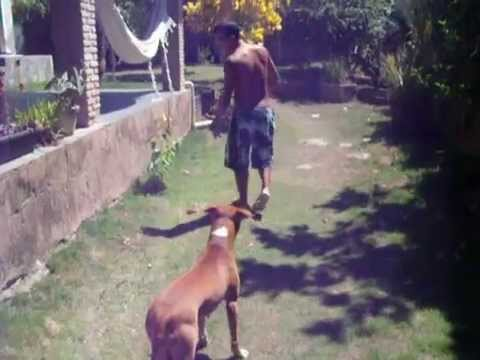 Zara Rednose Pitbull Training (Part-2) Vertical Leap Video