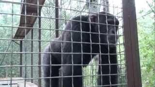 Зоопарк в Ялте. Yalta Zoo, Crimea, 2012