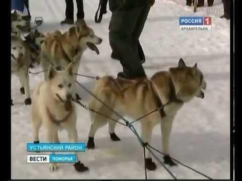 """Спортивный клуб """"Снежные псы"""""""