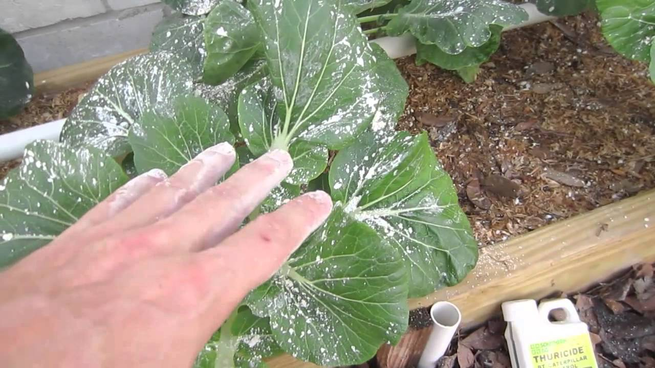 Organic pest control for vegetable gardens youtube for Garden pesticides