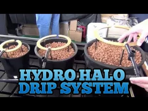 Hydro Halo Aussie Halo's Grow Room Drip System Set up Best Easiest Drip System indoor Garden
