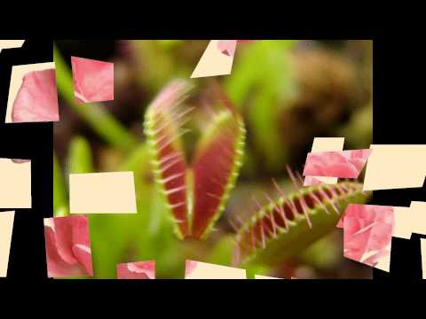 Gif Animation_Flowers (HD1080p)