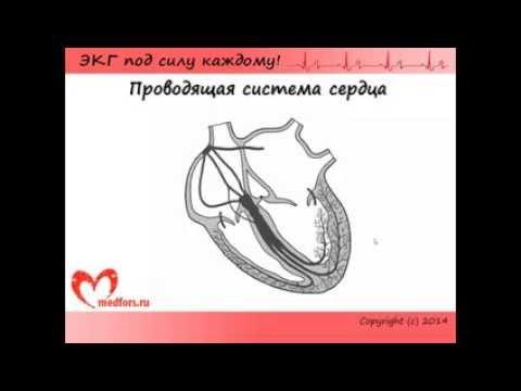 Учебник мурашко экг скачать pdf - ciwalljiba's blog