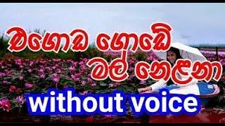 Egoda Gode Mal nelana Karaoke (without voice) එගොඩ ගොඩේ මල් නෙළනා