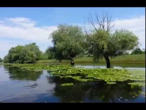 Inside the Danube delta