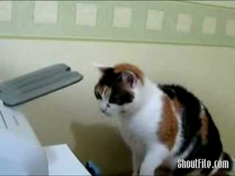 Cat Kills Printer