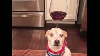 Funny Animal Videos 2018