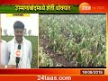 Peekpani | Osmanabad | Farmers Demand Help To Save Crops In Drought Region
