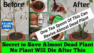 How To Revive Dying Plant : Best Solutions For Any Issue a Plant Can Have.