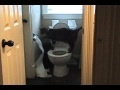 Youtube replay - bengal cat uses toilet and unrolls ...