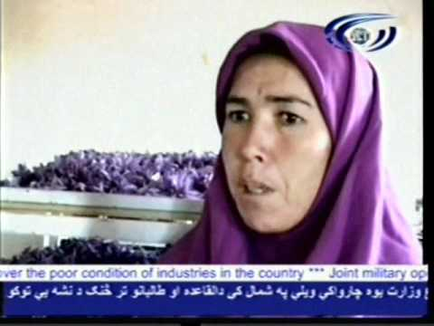 Increase the saffron in Herat .wmv